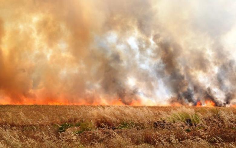 مواسم الحصاد الهاربة من حرائق السويداء